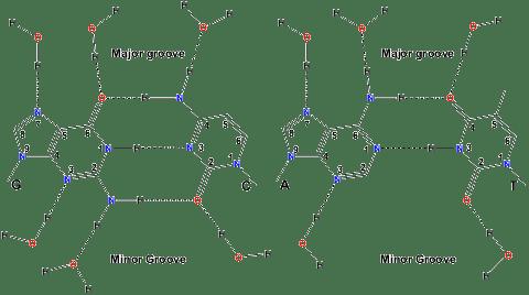 RNAHydrogenBons