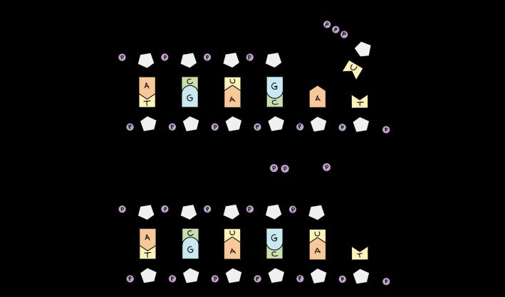 RNAPairing